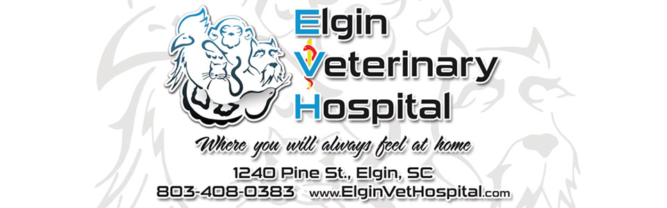 food lion elgin sc